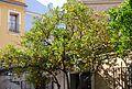 Taronger agre del pati de la llotja de la Seda, València.JPG