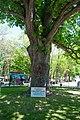 Tavrida oak2.jpg