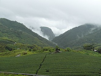 High-mountain tea - Image: Tea plantation Alishan