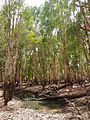 Tea tree swamp.jpg