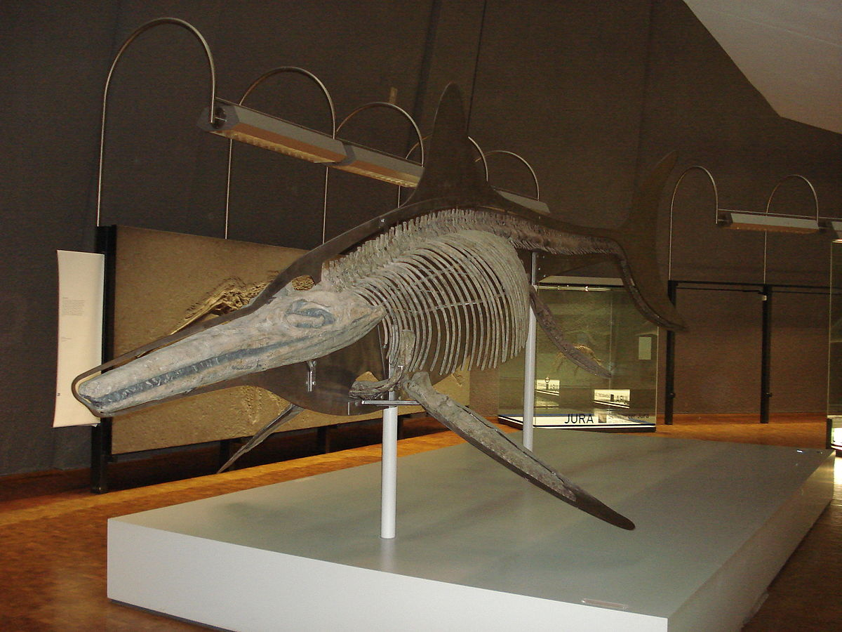 Temnodontosaurus - Wikipedia  Temnodontosauru...