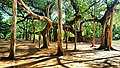 The Banyan Tree (Ficus benghalensis) , Auroville ,Pondicherry.jpg