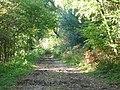 The Drove Road (North Downs Way) - geograph.org.uk - 70918.jpg