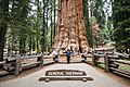 The General Sherman tree - Sequoia National Park (33241877800).jpg