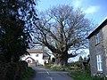 The Great oak, Hurstway Common - geograph.org.uk - 376424.jpg