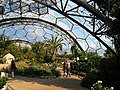 The Hot, Dry Biome, Eden Project - geograph.org.uk - 219410.jpg
