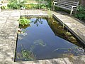 The Pond - geograph.org.uk - 747138.jpg