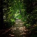 The Trail (29281692828).jpg