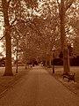 The Vines (Rochester).jpg