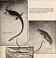 The dinosaur book - the ruling reptiles and their relatives (1951) (20400509695).jpg