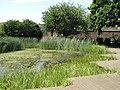 The pond in Twinkle Park, Watergate Street - Borthwick Street, SE8 - geograph.org.uk - 1498257.jpg