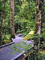 The way - Atherton Tableland, Queensland, Australia.jpg