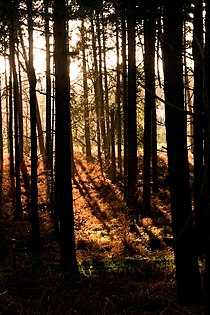 Thetford forest dtab.jpg