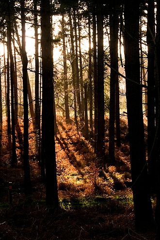 Thetford Forest - Image: Thetford forest dtab