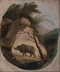 The Indian Rhinocero