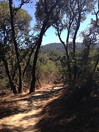 Thornewood Open Space Preserve