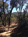 Thornewood Open Space Preserve mountains and trail.jpg
