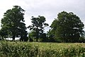 Three trees in a row, Wickhurst Farm - geograph.org.uk - 1380052.jpg