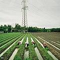 Tien Giang Farmers (237758059).jpeg