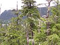 Tongass National Forest 18.jpg