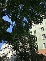 Torkkelinmäen taloja puiden takana.jpg