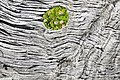 Torres del Paine, troncos 8.jpg