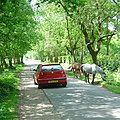 Traffic calming New Forest style - geograph.org.uk - 121227.jpg