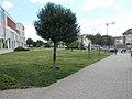 Tree at Árkád Shopping Center. '14-es út, Árkád üzletház' bus stop, tower crane, 2018 Győr.jpg