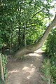 Tree in the path - geograph.org.uk - 1449756.jpg