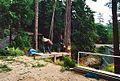 Tree removal beside Glass House - panoramio.jpg