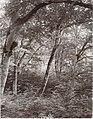 Trees, Dyrehaven Park, Denmark (3409416320) (3).jpg