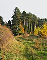 Trees and shrubs in Kings Forest, Suffolk.jpg