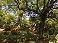 Trees around Shinjiike Pond in Dazaifu Temman Shrine.JPG