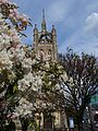 Trinity church and blossom, SUTTON, Surrey, Greater London (3).jpg