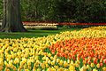 Tulips-2545.jpg