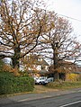Two grand trees - geograph.org.uk - 1081793.jpg