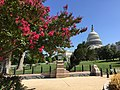 US Capitol with flowers 2016.jpg