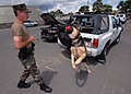 US Navy 070329-N-4965F-003 Military working dog, Arpi, a 5-year-old German Sheppard, catches a chew toy in mid-air thrown by Master-at-Arms 1st Class Doug Johnson.jpg