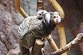 Ueno zoo, Tokyo, Japan (6154414977).jpg