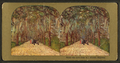 Under the live oaks of a Florida Highway, from Robert N. Dennis collection of stereoscopic views.png