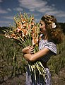 Unidentified woman holding gladiolus at Terra Ceia Island Farms, Florida.jpg