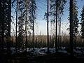 Vahteristo (luonnonsuojelualue).jpg