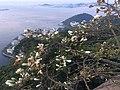 View from Sugarloaf Mountain, Rio de Janeiro.jpg