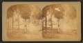 View of a man standing in the Park, by Doerr & Jacobson.png