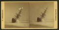View of the W.F. Marshall wreck, by Freeman, J. (Josiah) 3.png