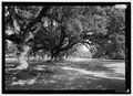 View west of allee looking from the southeast - Oaklawn Plantation, Highway 494, Natchez, Natchitoches Parish, LA HABS LA-1317-4.tif