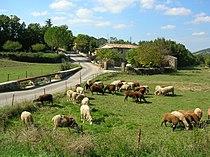 Village Gard.jpg