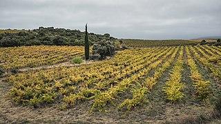 Vineyard in Cabrerolles.jpg