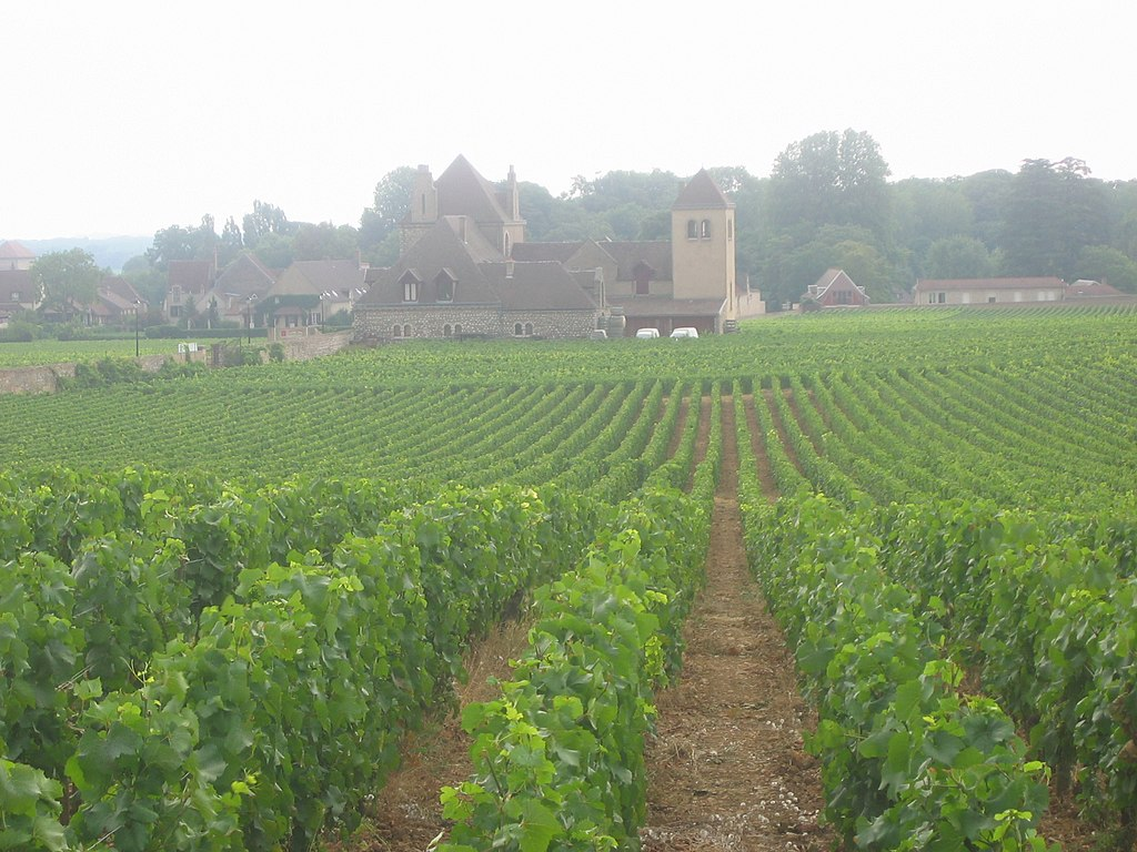 フランス ブルゴーニュ地域のブドウ畑/wikipediaより引用