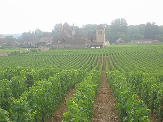 Clos de Vougeot - A view inside the vineyard
